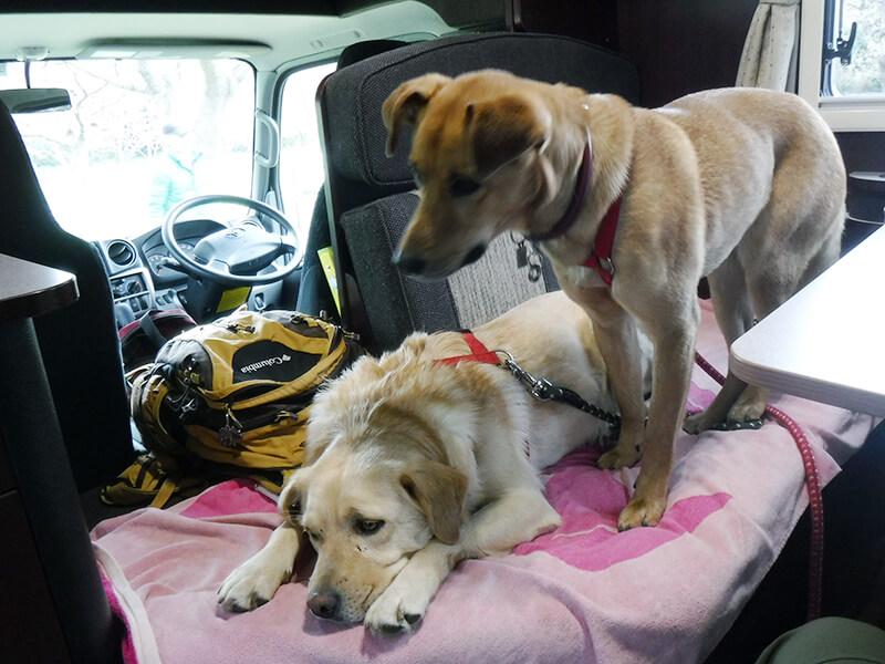 ペットとキャンピングカーの旅